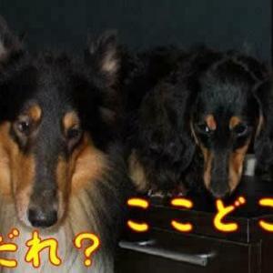 祟りじゃ~犬神様の祟りじゃ~(笑)( ̄▽ ̄;)