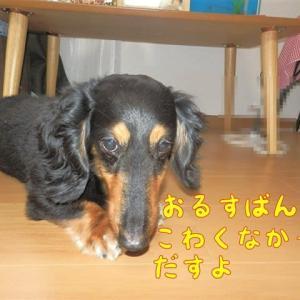 犬の分離不安障害 ルイスのトラウマ