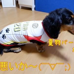 夏用の犬服、大バーゲン