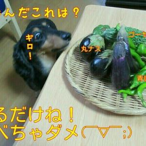 夏野菜とゴーヤ