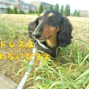 ストレスは犬も食わない(-_-;)