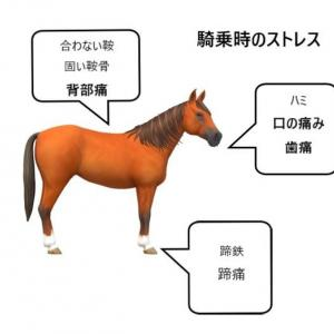 馬の疝痛を引き起こすもの