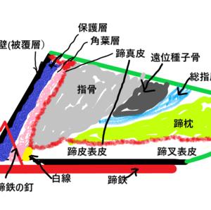 蹄の管理ー蹄鉄4