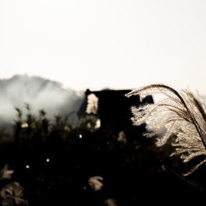 田んぼの近くでススキを撮影|冬の写真