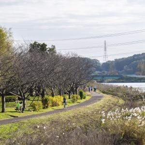 写真|新川沿いのサイクリングロードから見る