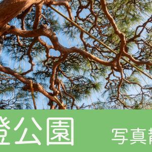 【東京のいい景色】清澄庭園が綺麗すぎる 写真撮影