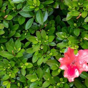 【写真】学校にあった花を撮影