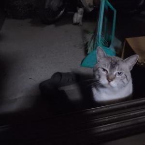 小次郎、久々のチュールに涙を流す