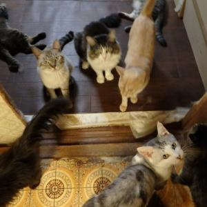 猫軍団もそろそろ暴れ出す季節