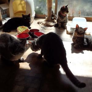 ひなたぼっこで、まったり猫軍団