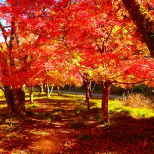 旧大萩村に紅葉狩りへ