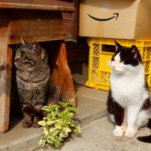 近所のコンビニでイケメン(猫)に再会しました