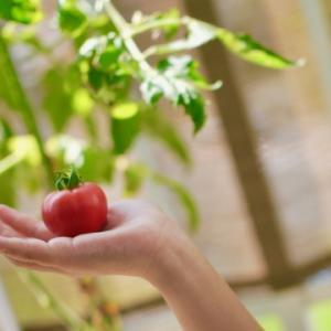 できるだけ安くベランダで家庭菜園をはじめる方法