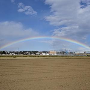 一昨日の綺麗な虹(2019.11.13)