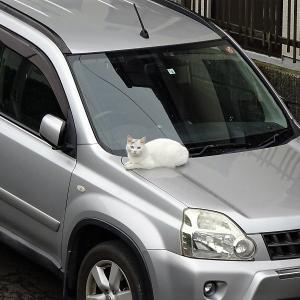 車上のネコ