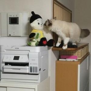 キッチンカウンターの先に進みたい。