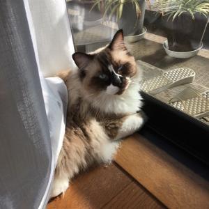 窓辺で陽にあたって。