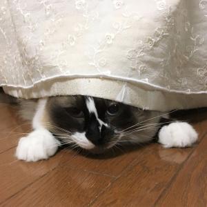 カーテンにひそんでからの~!