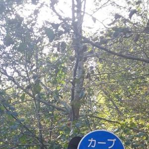 古峰ヶ原40番までのヒルクライム