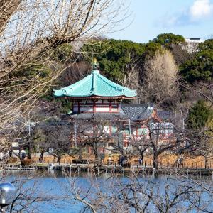 上野東照宮のぼたん苑の冬牡丹 その1