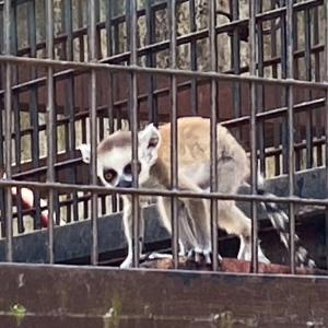 宇都宮動物園の珍獣たち