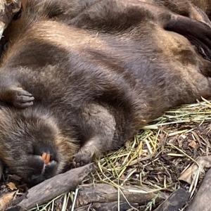 宇都宮動物園の癒し系動物