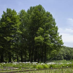 井頭公園の自然観察色々