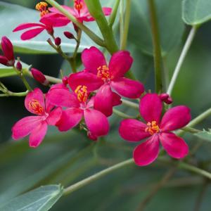 とちぎ路散策 その6 とちぎ花センターの温室の花と実①