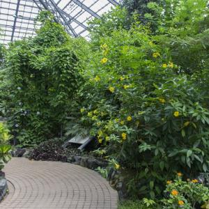 とちぎ路散策 その7 とちぎ花センターの温室の花と実②