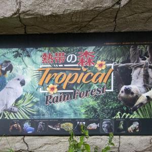 とちぎ路散策 その29 那須どうぶつ王国 ⑮熱帯の森のコモンマーモセットとルリコンゴウインコ