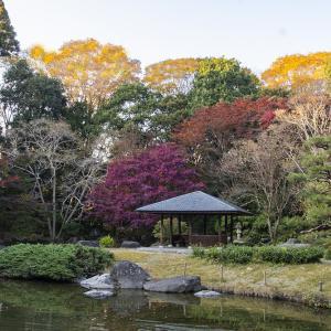 宇都宮の栃木県中央公園の紅葉、見頃でした。その5 カルガモの羽繕い体操