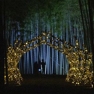 宇都宮の若竹の杜のライトアップ竹林散策 その3 竹灯りアートのトンネル