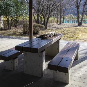 栃木市の星野遺跡公園 その3 吾輩は星野遺跡の番猫じゃ