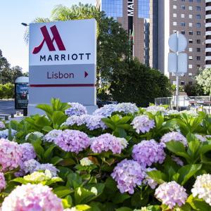 ポルトガルの旅 その70 リスボンのホテルの紫陽花など