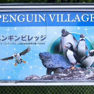 那須どうぶつ王国のペンギンビレッジのニシツノメドリ