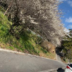 晴れ   春が近くなって来てるなぁ✨
