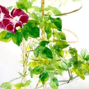 【水彩】花のスケッチの描き方や進め方【初心者向け】
