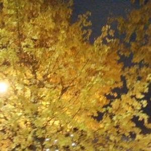 銀杏の木の紅葉が綺麗でした。