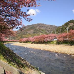 三連休に伊豆へ旅行、春を感じてきました