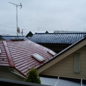 3月に2回目の雪!春はすぐソコなのに