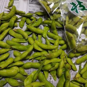 あけぼの大豆の枝豆は、雨の中での収穫になりました