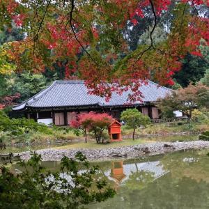 秋の浄瑠璃寺〜GoTo関西旅行⑦
