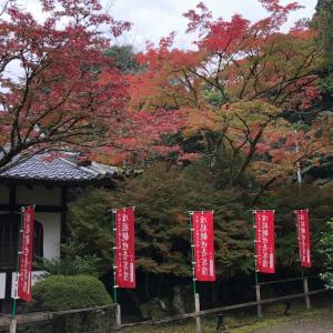 醍醐寺は広かった〜GoTo関西旅行⑧