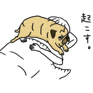 目覚ましパグ