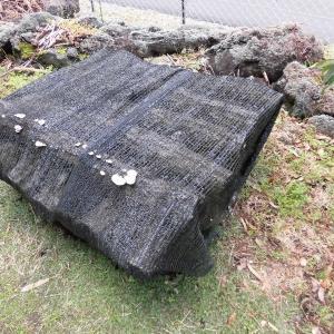 椎茸原木をセットしましたよ~