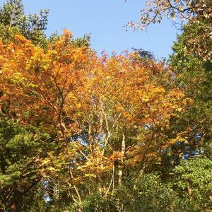 秋だね~紅葉