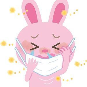 花粉の季節には~甜茶~?