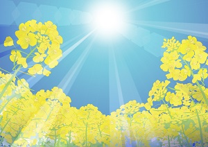 紫外線・日焼け後のケアに!自作!桃の葉化粧水~