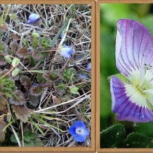 空き地ガーデンの花たち