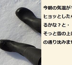 ラッタタ~~~凍み渡りが出来た!